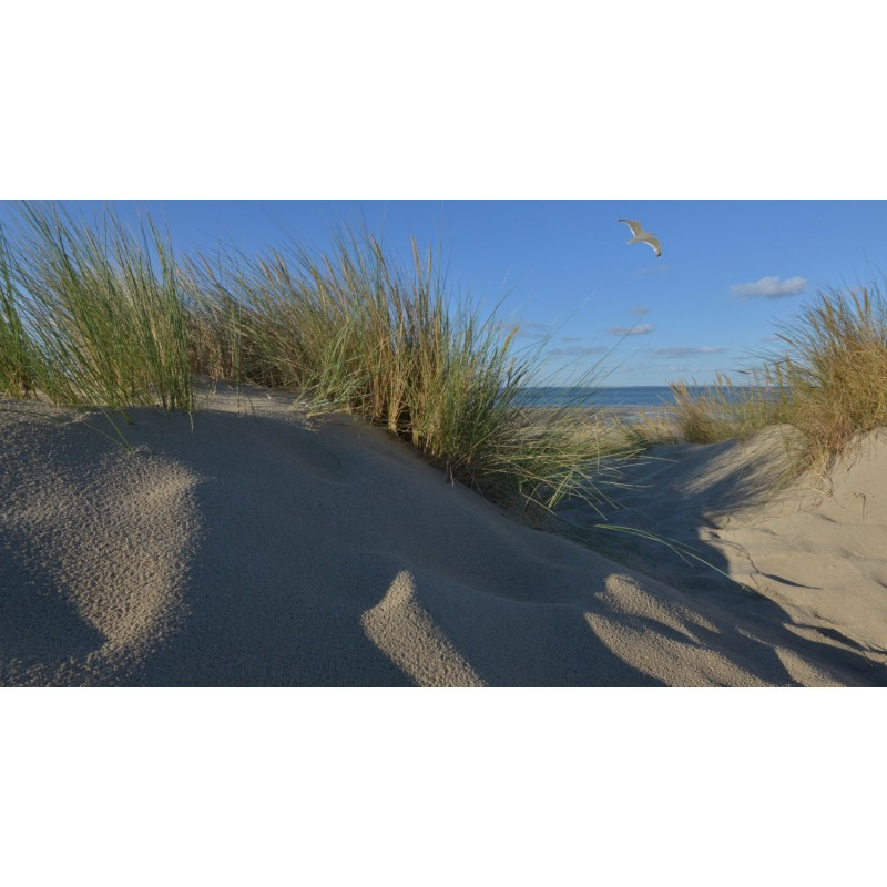 Fotobehang Strand Zee.Fotowand Duinen Schouwen Duiveland Grote Keuze Fotobehang Zee En Strand