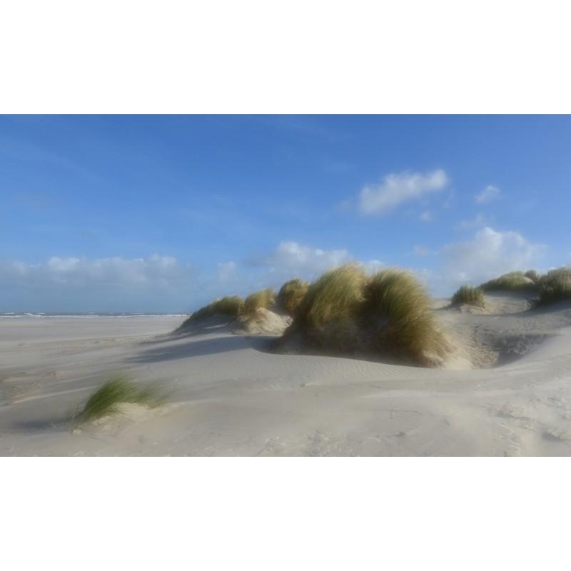 Fotobehang Strand Zee.Fotowand Strand Schiermonnikoog Grote Keuze Fotobehang Zee En Strand
