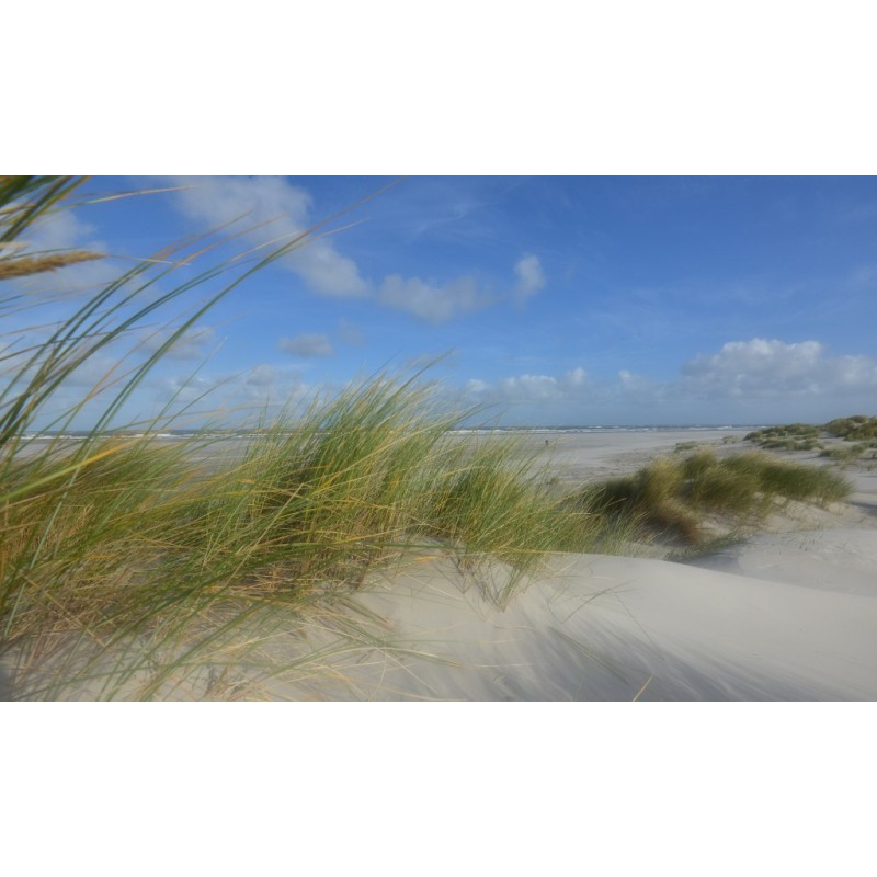 Fotobehang Strand Zee.Fotowand Duinen Schiermonnikoog Grote Keuze Fotobehang Zee En Strand