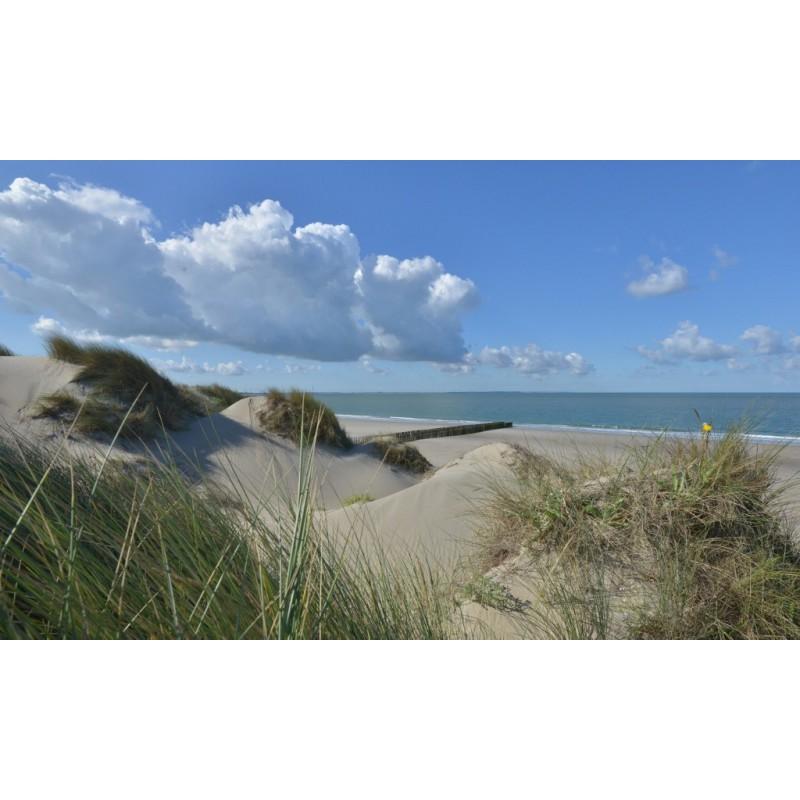 Fotobehang Strand Zee.Fotowand Duinen Zeeland Grote Keuze Fotobehang Zee En Strand