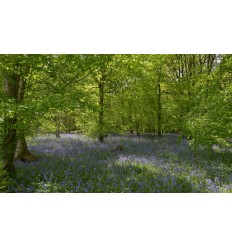 Fotobehang bos met blauwe Lelies fotobehangmarkt.nl
