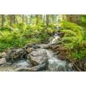 Fotowand bergbeekje Oostenrijk Smaragdtahl