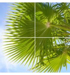 Fotoplafond Palmboom. Fotowandenshop.nl